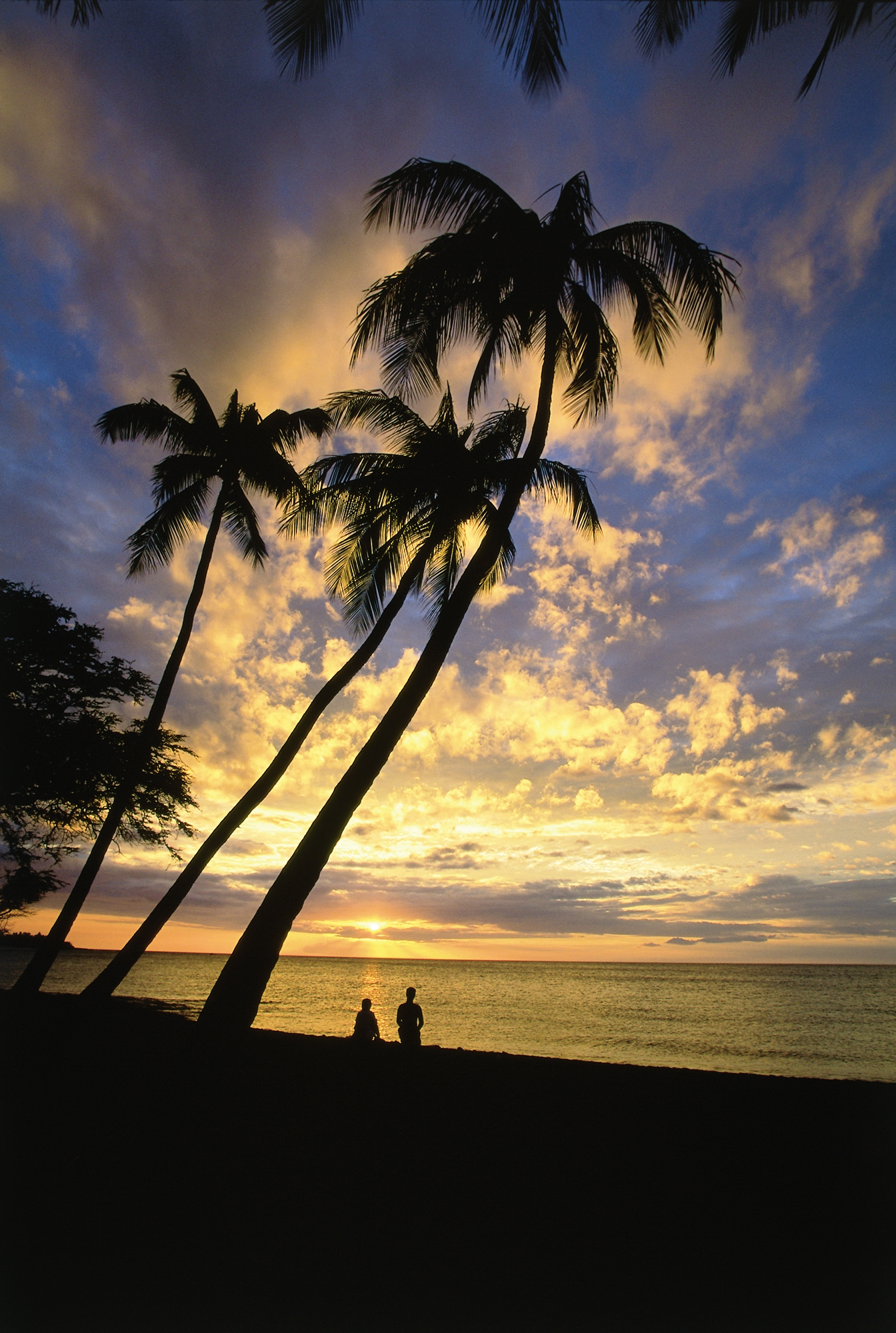 Hawaii Visitor And Convention Bureau Traveltomaui S Blog